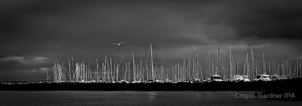 Fremantle Seagull by Crispin  Gardner IPA