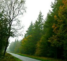 Forest Drive - Dalby Forest by Trevor Kersley