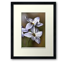 Star White with shades Framed Print