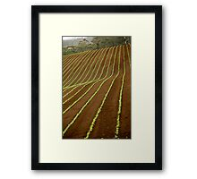 Strip Framed Print