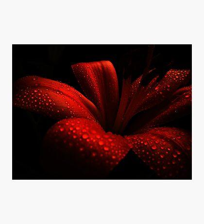 Ruby. Photographic Print