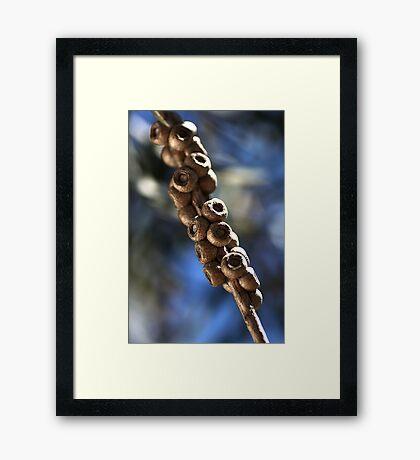 Natures Kebab Framed Print