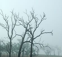 Ghost Trees - NSW by CasPhotography