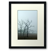Ghost Trees - NSW Framed Print
