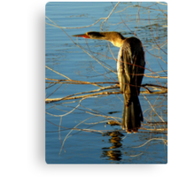 I Swear, Detective, He Went That Way ! Canvas Print