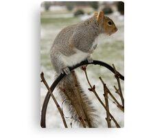 Squirrel Alert! Canvas Print