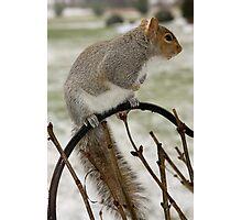 Squirrel Alert! Photographic Print