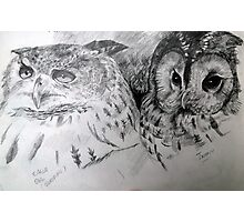 Sketch book owls Photographic Print