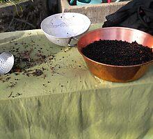 Elderberries in Copper by millevache