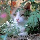 Buddy in Hiding by Bill Spengler