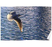 Flying across water (seagull) Poster