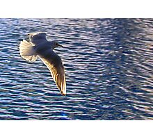 Flying across water (seagull) Photographic Print