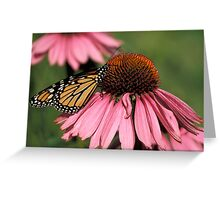 Monarch on Echinacea Greeting Card