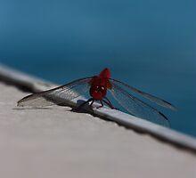 Dragonfly by arekkusu