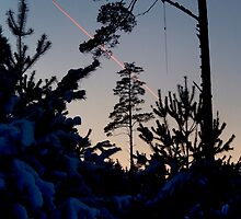 Pines and Sky by Antanas