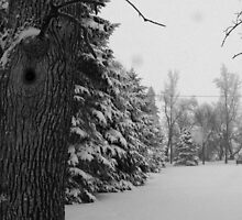 Winter Wonderland (in bw) by lizsti20