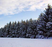 Snowy Pines by Lynne Morris