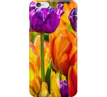 Tulips Enchanting 43 iPhone Case/Skin