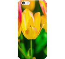 Tulips Enchanting 39 iPhone Case/Skin