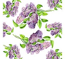 lilac blooming branch watercolor illustration.  Photographic Print