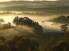 """'Summer Mist"""" by debsphotos"""