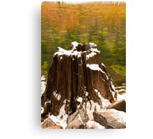 Old Tree Stump Canvas Print