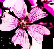 Pretty Flower by bright--eyes