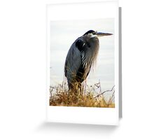 A Magnificent BLUE HERON.....on a cold Fall day..... Greeting Card
