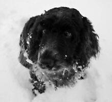 Snowy Cinders by bright--eyes