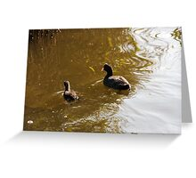 Coot with young Coot Greeting Card