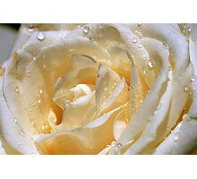 Freshness in white Photographic Print