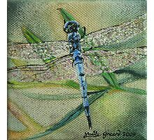 Little Blue Dragonfly Photographic Print