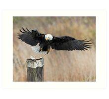 Eagle Attack Art Print