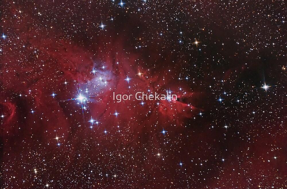 """Cone"" and ""Fox Fur"" nebulas, ""Christmas Tree"" star Cluster by Igor Chekalin"