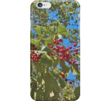 Summer Holly iPhone Case/Skin