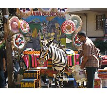 Mexican Zebra Photographic Print