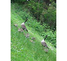 Spring Babies Photographic Print