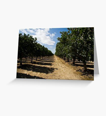 Pistachio Orchard Greeting Card
