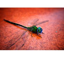 Green Dragon Photographic Print