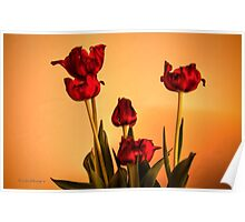 HDR Tulips! Poster