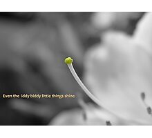 Even the iddy biddy little things shine Photographic Print