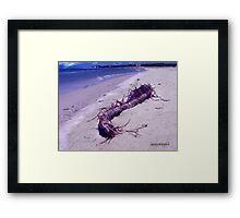 St. Vincent Island Driftwood Framed Print