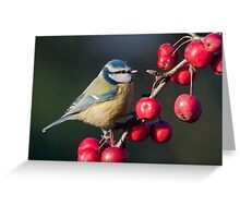 Feast for Featherballs Greeting Card