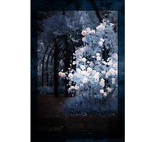 Midnight Garden Photographic Print