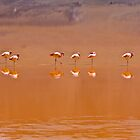 Reflecting Flamingos by Craig Baron