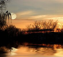 One Splendid Pond by Zoe Marlowe