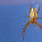 Spider spider burning bright....... by Josie Jackson