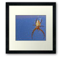 Spider spider burning bright....... Framed Print