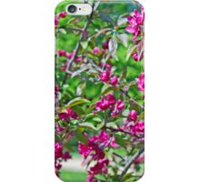 Pink spring flowers on branches iPhone Case/Skin