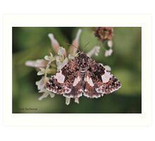 Four-spotted moth Art Print